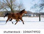 beautiful brown mare running in ...   Shutterstock . vector #1046474932