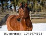 beautiful brown mare running in ...   Shutterstock . vector #1046474935
