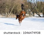 beautiful brown mare kicks out...   Shutterstock . vector #1046474938