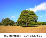 Couple lying down under big round tree on green grass