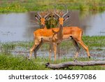 close view of a two male... | Shutterstock . vector #1046597086