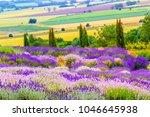 lavender fields in england  uk | Shutterstock . vector #1046645938