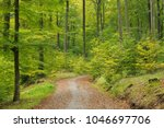 beech forest in autumn  nature... | Shutterstock . vector #1046697706