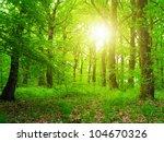 forest in sunrise | Shutterstock . vector #104670326