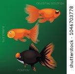 freshwater aquarim pompom...   Shutterstock .eps vector #1046703778