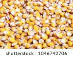 the background of the corn... | Shutterstock . vector #1046742706