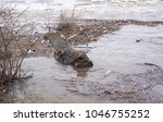 Small photo of Flood debris and wood in a river