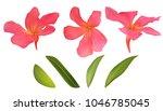 oleandr flowers blossom red... | Shutterstock .eps vector #1046785045