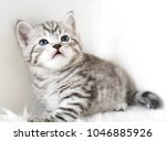 Stock photo cute kitten is sitting striped kitten kitten for advertising your products 1046885926