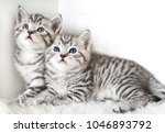 Stock photo two cute kitten kittens are beautiful striped 1046893792