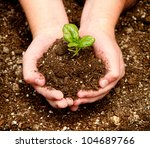 a child holding a seedling in... | Shutterstock . vector #104689766