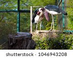 caged large african marabou... | Shutterstock . vector #1046943208