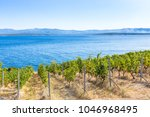 island of brac in croatia ... | Shutterstock . vector #1046968495