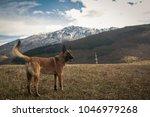 belgian shepherd posing in...   Shutterstock . vector #1046979268