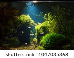 planted tropical fresh water... | Shutterstock . vector #1047035368