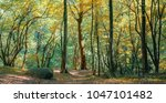coniferous forest in the... | Shutterstock . vector #1047101482