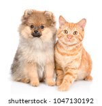 Stock photo cute spitz puppy and red cat together isolated on white background 1047130192