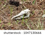 Deer Skull Found In The Woods...