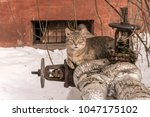 Small photo of A well-fed stray cat is heated on the pipe of the heating plant.