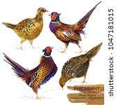 Pheasant Hand Drawn Watercolor...