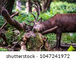 a large red deer stag sniffing... | Shutterstock . vector #1047241972