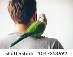 monk parakeet is looking at... | Shutterstock . vector #1047353692