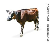 cow calf brown  vector   Shutterstock .eps vector #1047382972