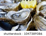preparing french oysters for... | Shutterstock . vector #1047389386