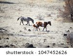 horses in the wild | Shutterstock . vector #1047452626