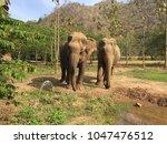 Elephants In Chaing Mai