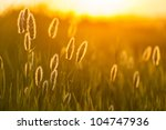 Composition With Wild Grass In...