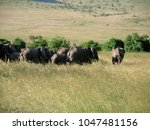 wild beautiful elephants | Shutterstock . vector #1047481156