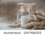 rye natural leaven for bread in ... | Shutterstock . vector #1047486355