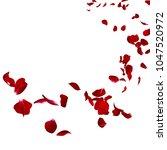 the petals of a dark red rose... | Shutterstock . vector #1047520972