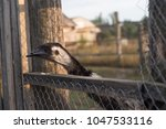 the ostrich or common ostrich ... | Shutterstock . vector #1047533116