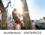 arborist man cutting a branches ... | Shutterstock . vector #1047649225