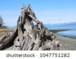 Driftwood Sculptures On A Sunn...