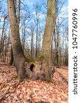 trunk of tree | Shutterstock . vector #1047760996