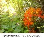 cross represenation on a flower