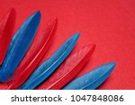 blue and red  feathers.... | Shutterstock . vector #1047848086