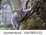 A Cute Squirrel Looking Into...