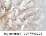 complex shape sea coral | Shutterstock . vector #1047943228