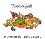 fruits. tropical fruit.... | Shutterstock .eps vector #1047951052