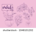 hand drawn sketch orchid... | Shutterstock .eps vector #1048101202