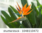 Exotic Tropical Flower Of...