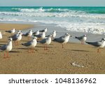 The Seagulls Standing On The...