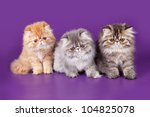 Three Persian Kitty On The...