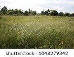 High Grassy Field