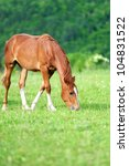 Horse in meadow - stock photo