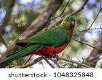 female king parrot  queen mary... | Shutterstock . vector #1048325848